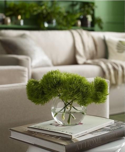 pb-coty-plant